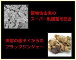 ブラックジンジャー、スーパー乳酸菌.jpg